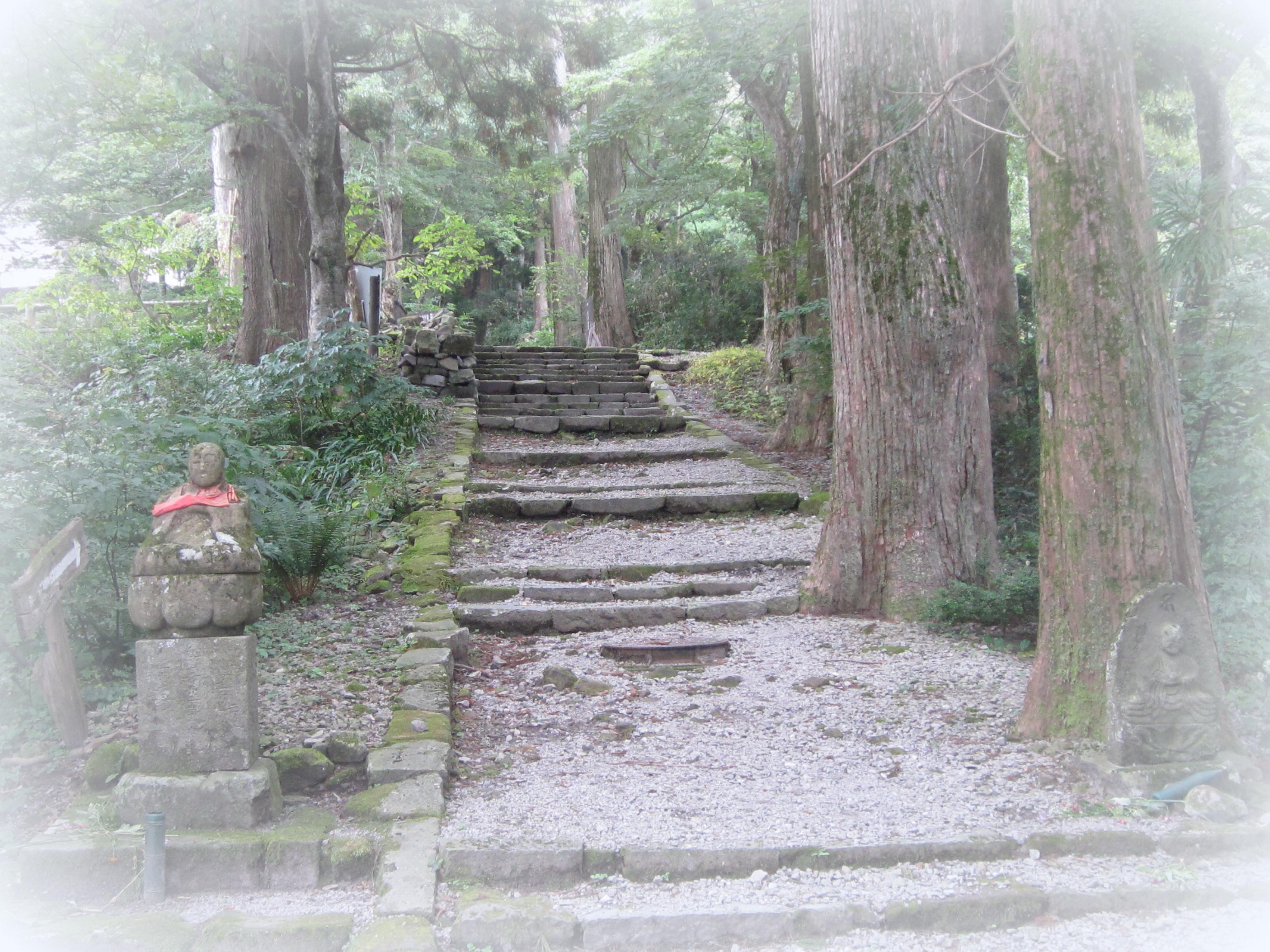 ひのき(木)